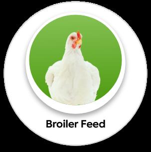 broilder feed