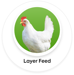layer feed