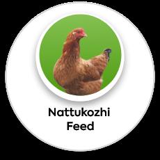 nattukozhi feed