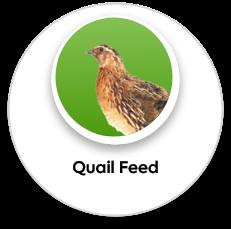 quail feed